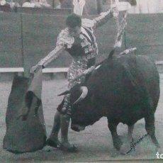 Tauromaquia: FOTO ANTIGUA DE TOROS. Lote 99690607