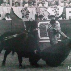 Tauromaquia: FOTO ANTIGUA DE TOROS DE LA PLAZA DE TOROS DE JEREZ. Lote 99814839