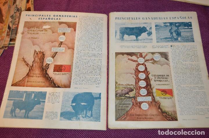Tauromaquia: Años 50 - 17 REVISTAS TAURINAS - 17 EJEMPLARES DE LA REVISTA EL RUEDO - HAZME UNA OFERTA - VINTAGE - Foto 5 - 106959791