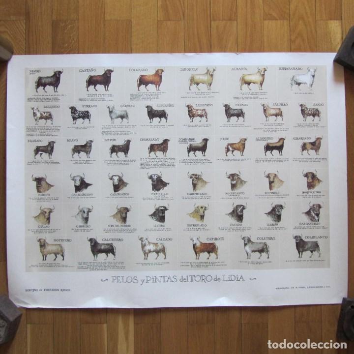 Poster O Panel Pelos Y Pintas Del Toro De Lidia Vendido En Venta