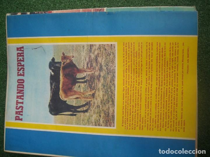 Tauromaquia: EL RUEDO SEMANARIO GRÁFICO DE LOS TOROS 73 EJEMPLARES AÑO 1962 1966 1967 1968 1970 1971 1972 1973 - Foto 71 - 167847784