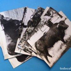 Tauromaquia: 8 FOTOGRAFIAS QUE SE UTILIZABAN EN LA LITOGRAFIA ORTEGA PARA LOS CARTELES DE TOROS - AÑOS 1940-50. Lote 178714182