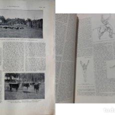 Tauromaquia: LA HARDE. LES JEUX DE LA COURSE LANDAISE. DES PESQUIDOUX JOSEPH, AYMARD PIERRE. 1925. L'ILLUSTRATION. Lote 199488780