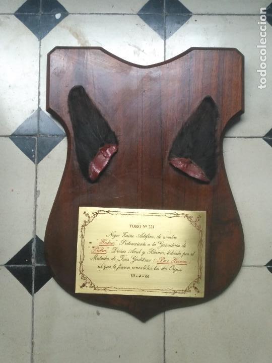 Tauromaquia: GRAN METOPA CAOBA CON PLACA 2OREJAS TORO CADIZ 1966 DIVISA AZUL Y BLANCA MATADOR JOSE HERRERA PALHA - Foto 2 - 203502506