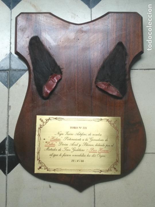 Tauromaquia: GRAN METOPA CAOBA CON PLACA 2OREJAS TORO CADIZ 1966 DIVISA AZUL Y BLANCA MATADOR JOSE HERRERA PALHA - Foto 3 - 203502506