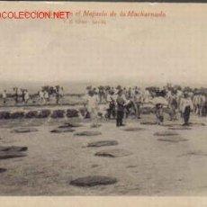 Coleccionismo de vinos y licores: TARJETA POSTAL DE LA VENDIMIA EN EL MAJUELO DE LA MACHARNUDO.. Lote 925324