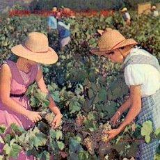 Coleccionismo de vinos y licores: CAVAS CODORNIÚ. VENDIMIA. Lote 211901