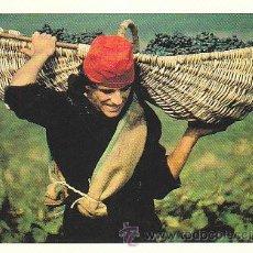Coleccionismo de vinos y licores: LA VENDIMIA EN EL MEDOC FRANCÉS, POSTAL. Lote 22222494