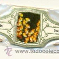Vitolas de colección: 14-1121. VITOLAS MURILLO, ORQUIDEAS, 24 VIT. FM, BLANCO. Lote 21941253