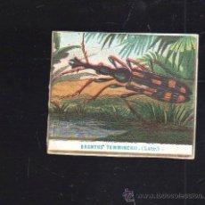Vitolas de colección: CUBA. VISTA DE TABACO. 1860. IMP.ALEMANA. LAS PRIMERAS VISTAS QUE SE HICIERON PARA MERCADO CUBANO.. Lote 37992754