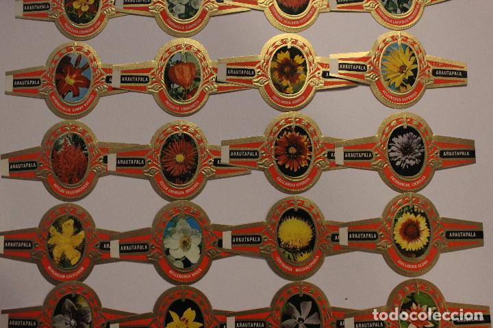 VITOLAS ARATAUPALA - FLORES DE CANARIAS. 24 UNIDADES, SERIE COMPLETA. IMPECABLES (Coleccionismo - Objetos para Fumar - Vitolas)