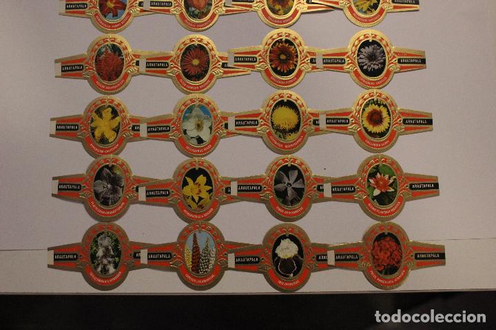 Vitolas de colección: VITOLAS ARATAUPALA - FLORES DE CANARIAS. 24 UNIDADES, SERIE COMPLETA. IMPECABLES - Foto 2 - 62548272