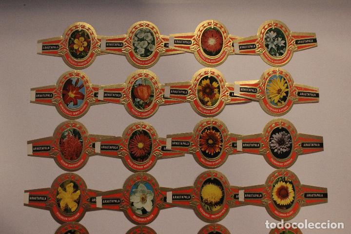 Vitolas de colección: VITOLAS ARATAUPALA - FLORES DE CANARIAS. 24 UNIDADES, SERIE COMPLETA. IMPECABLES - Foto 3 - 62548272