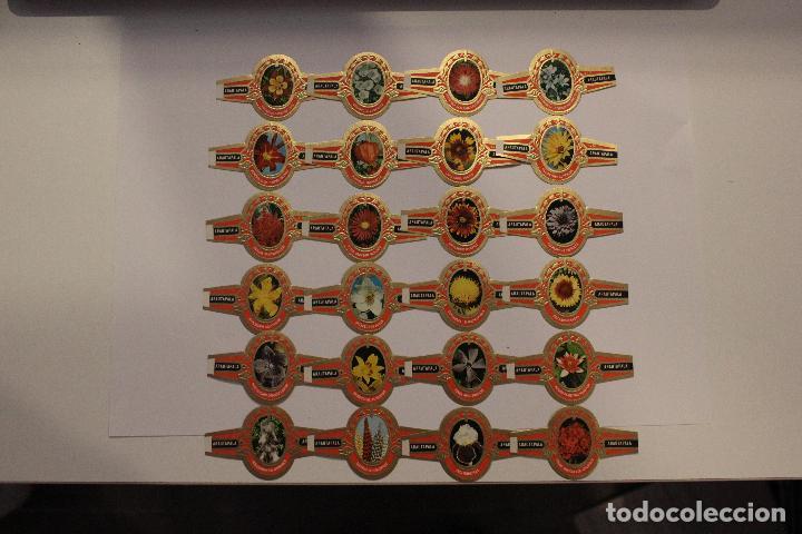 Vitolas de colección: VITOLAS ARATAUPALA - FLORES DE CANARIAS. 24 UNIDADES, SERIE COMPLETA. IMPECABLES - Foto 4 - 62548272