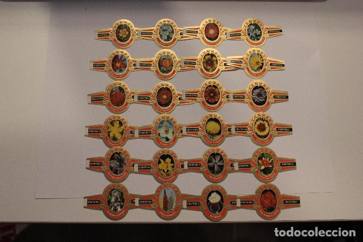 Vitolas de colección: VITOLAS ARATAUPALA - FLORES DE CANARIAS. 24 UNIDADES, SERIE COMPLETA. IMPECABLES - Foto 5 - 62548272