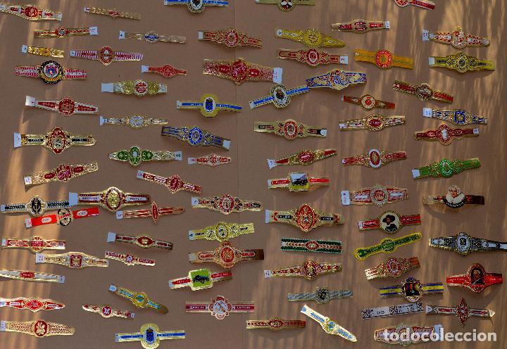 LOTE DE SETENTA Y OCHO (78) VITOLAS (Coleccionismo - Objetos para Fumar - Vitolas)