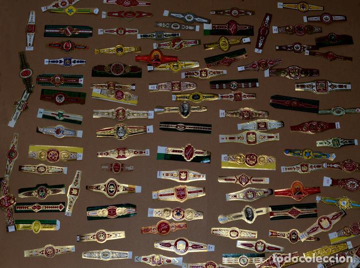 LOTE DE CIEN (100) VITOLAS (Coleccionismo - Objetos para Fumar - Vitolas)