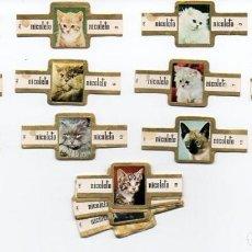 Vitolas de colección: VITOLAS, SERIE COMPLETA MARCA NICOLETO- GATOS, 24 VITOLAS. Lote 86342544