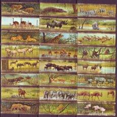 Vitolas de colección: MERCATOR, SAFARI, 24 VITOLAS, SERIE COMPLETA.. Lote 118397979