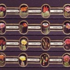 Vitolas de colección: GULDEN VLIES, FLORES DE CACTUS, 24 VITOLAS, SERIE COMPLETA.. Lote 151439374