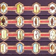 Vitolas de colección: PANTER, FAUNA MARINA, 24 VITOLAS, SERIE COMPLETA.. Lote 155989830