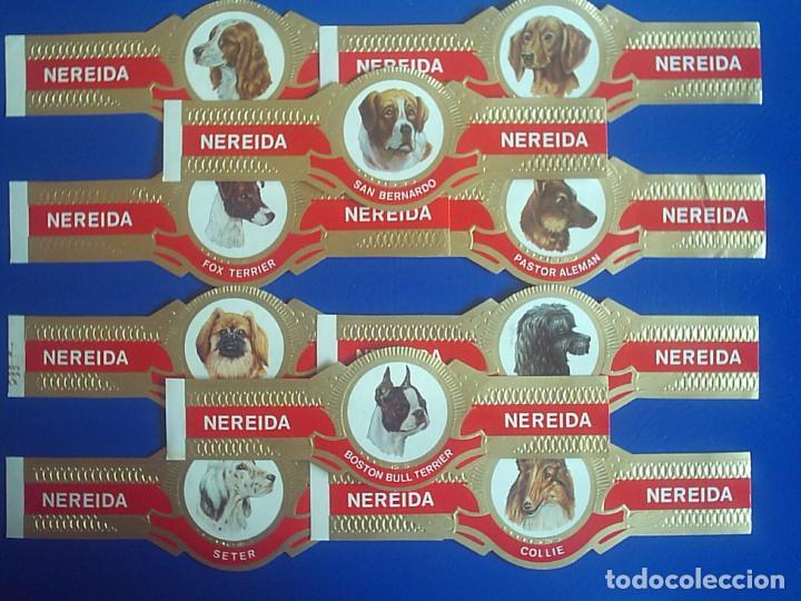NEREIDA, RAZAS DE PERROS, 10 VITOLINAS, SERIE COMPLETA. (Coleccionismo - Objetos para Fumar - Vitolas)