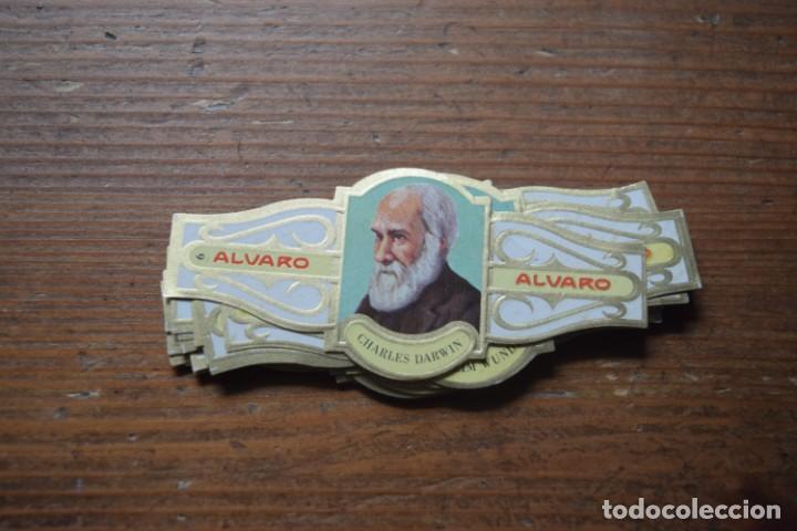 VITOLAS DE FILOSOFOS, SERIE III, ALVARO, COMPLETA (Coleccionismo - Objetos para Fumar - Vitolas)