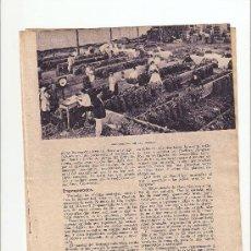 Coleccionismo: HOJAS REPORTAJE.AÑO1934.TENERIFE.PLATANOS.LA OROTAVA.GARACHICO.LAS ARENAS.EMPAQUETADO.. Lote 11295484