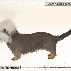 Coleccionismo: ** PA190 - FICHA DEL DIARIO LAS PROVINCIAS - DANDIE DINMONT TERRIER. Lote 31991081
