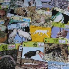 Coleccionismo: FICHA DE ZOOLOGÍA. 106 FICHAS. EDIT. PLANETA 1992. SAFARI, CONOCER Y AMAR LOS ANIMALES. Lote 173660773