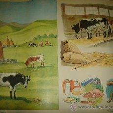 Coleccionismo: LÁMINA PARA ESCUELA, COLEGIO,2 LA VACA, IBARRA, ED.HIJOS DE SANTIAGO RODRÍGUEZ,BURGOS, 69 POR 52. Lote 32996254