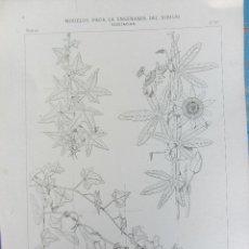 Coleccionismo: 12 LAMINAS DE VEGETACIÓN - MODELOS PARA LA ENSEÑANZA DIBUJO - J. SERRA Y GIBERT PROFESOR BELLAS ARTE. Lote 40166149