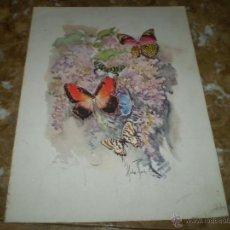 Coleccionismo: LAMINA MARIPOSAS. Lote 40356956
