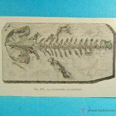 Coleccionismo: LA SALAMANDRA DE OENINGEN-SOLTAU-HEIDEKREIS-BAJA SAJONIA-ALEMANIA-10X17 CM-644-GRABADO.... Lote 40752731