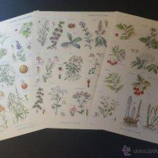Coleccionismo: 3 LAMINAS PARA ENCUADRAR DE PLANTAS. Lote 42709831