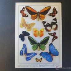 Coleccionismo: LAMINA PARA ENCUADRAR DE MARIPOSAS. Lote 42709958