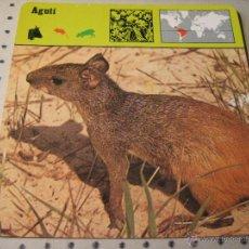 Coleccionismo: FICHA COLECCIONABLE ANIMALES. RENCONTRE. SAPE 1978.- AGUTI. Lote 42978408