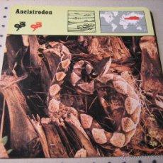 Coleccionismo: FICHA COLECCIONABLE ANIMALES. RENCONTRE. SAPE 1978.- ANCISTRODON. Lote 42978664
