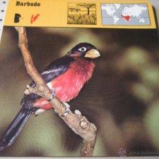 Coleccionismo: FICHA COLECCIONABLE ANIMALES. RENCONTRE. SAPE 1978.-: BARBUDO. Lote 42984060