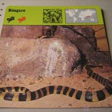 Coleccionismo: FICHA COLECCIONABLE ANIMALES. RENCONTRE. SAPE 1978.-: BUNGARO. Lote 42984398