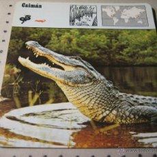 Coleccionismo: FICHA COLECCIONABLE ANIMALES. RENCONTRE. SAPE 1978.-: CAIMAN. Lote 42984467