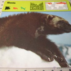 Coleccionismo: FICHA COLECCIONABLE ANIMALES. RENCONTRE. SAPE 1978.-:GLOTON. Lote 42994092