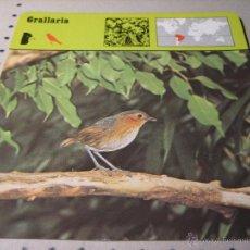 Coleccionismo: FICHA COLECCIONABLE ANIMALES. RENCONTRE. SAPE 1978.-:GRALLARIA. Lote 42994200