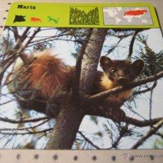 Coleccionismo: FICHA COLECCIONABLE ANIMALES. RENCONTRE. SAPE 1978.-:MARTA. Lote 43004127