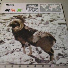 Coleccionismo: FICHA COLECCIONABLE ANIMALES. RENCONTRE. SAPE 1978.-:MUFLON . Lote 43004524