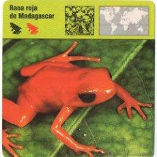 Coleccionismo: LOTE 80 FICHAS CONOCER Y AMAR LOS ANIMALES. PLANETA DAGOSTINI. VER LISTADO.. Lote 44652543