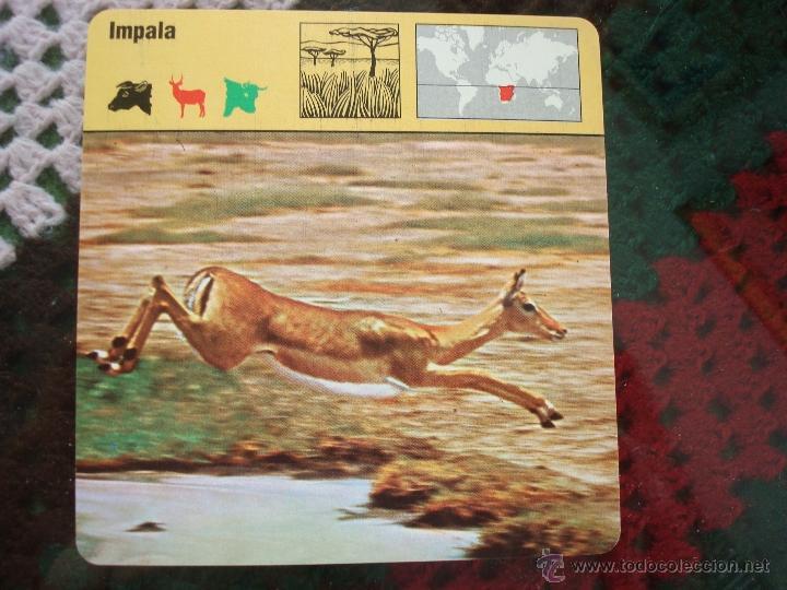 Coleccionismo: FICHA CONOCER Y AMAR A LOS ANIMALES SAFARI. AÑOS 80. LEER - Foto 2 - 47018757