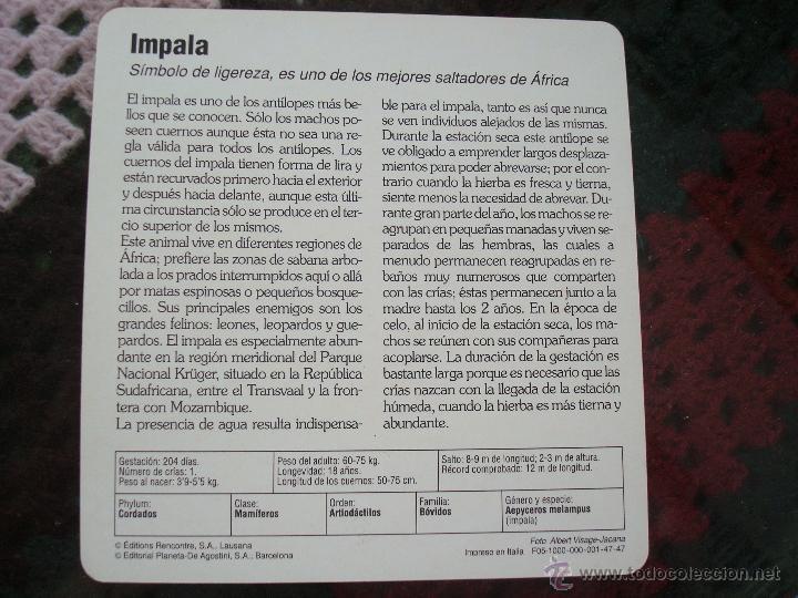 Coleccionismo: FICHA CONOCER Y AMAR A LOS ANIMALES SAFARI. AÑOS 80. LEER - Foto 3 - 47018757