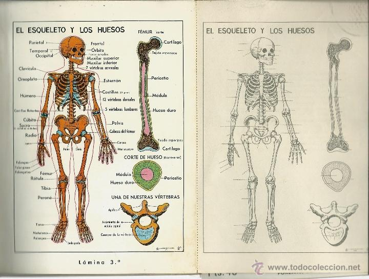 libro de todo el cuerpo humano fotografiado en - Comprar Documentos ...