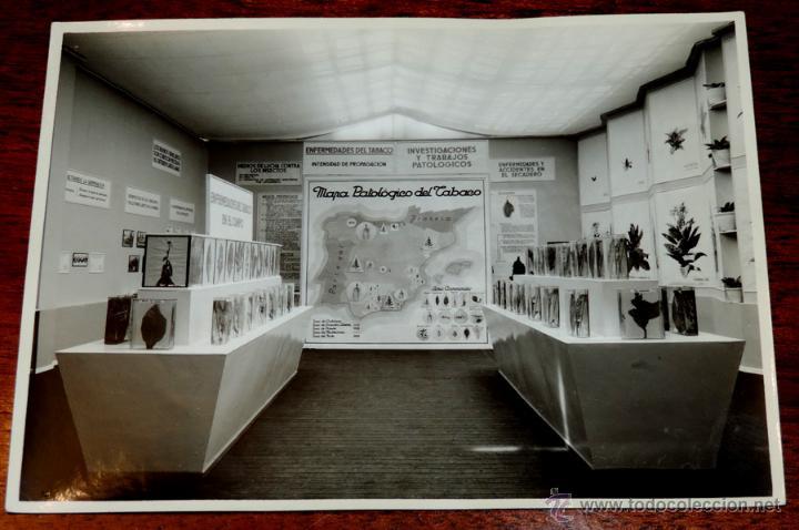 Coleccionismo: 22 FOTOGRAFIAS DE LA 1ª EXPOSICION NACIONAL DEL CULTIVO DEL TABACO, AÑO 1935, PALACIO DEL RETIRO, MA - Foto 4 - 51117782
